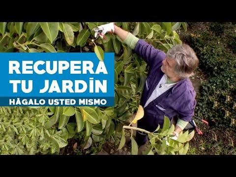 ¿Cómo limpiar y recuperar un jardín?