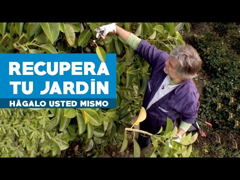 C mo limpiar y recuperar un jard n youtube for Arreglar mi jardin