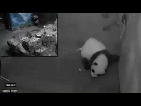 10-8-2015  When Bei Bei Cries, Mei Reacts Quickly