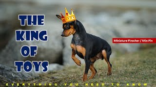 The King of  Toys  Miniature Pinscher / Min Pin |  Knowing and Caring