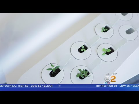 CNET Tech Minute: Indoor Gardens Go High-Tech