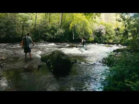 Fly Fishing Deep Creek In Great Smoky Mountains National Park, May 2019