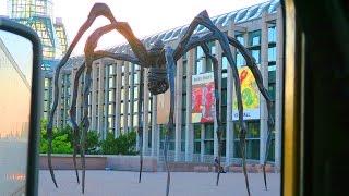 Giant Spider Terrorizes Ottawa - #501