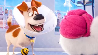 Max and Gidget find a Bee Toy - THE SECRET LIFE OF PETS 2 Funny Clip (2019)