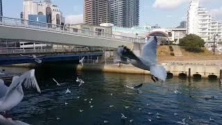 Chim hải âu / Cảng kobe nhật bản / Xuân canh tý nơi phương xa / Blog tiếng nhật