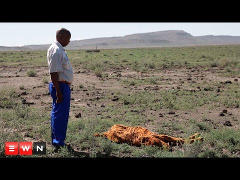Free State farmers hit hard by SA drought