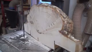 We are sawing a huge birch suvel (burl)