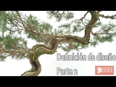 Definición de diseño | Parte 2 - Bonsai Colmenar
