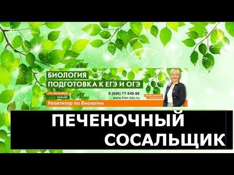 Лаборатория ОРГАНИЗАЦИИ ГЕНОМА ИБГ РАН