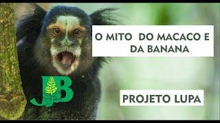 #02 PROJETO LUPA : O MITO DO MACACO E DA BANANA