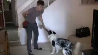 Dog Training Tip - Tugging With Your Dog