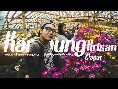 Kampung Krisan Clapar - Bandungan   #12 Explore Semarang - Central Java
