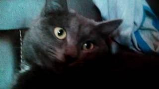 Советы по уходу за кошкой 😘
