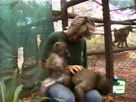 Growing Up Baboon, Growing Up Orangutan