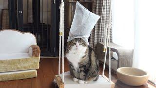 絶妙なバランスで頭にビニール袋が立つねこ。-A plastic bag stands on Maru's head in a perfect balance.-