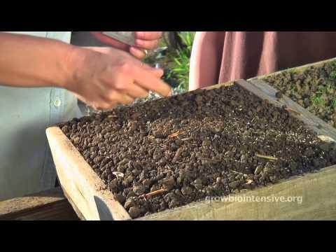 Session 2: GROW BIOINTENSIVE: A Beginner's Guide -- Growing Seedlings in Flats