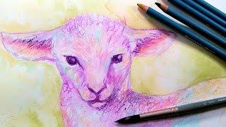 Baby Lamb in Watercolor Pencil Easy Sketch Along!