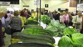 Allotment Diary : Harrogate Giant Vegetable Competition : World Record Carrot & Onion