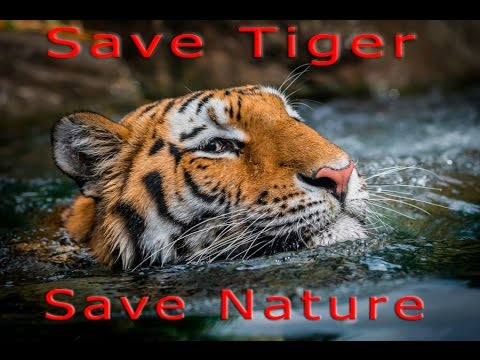 how to help save the bengal tigers
