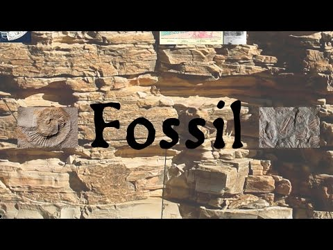 Fossil: The Language & History of Paleontology