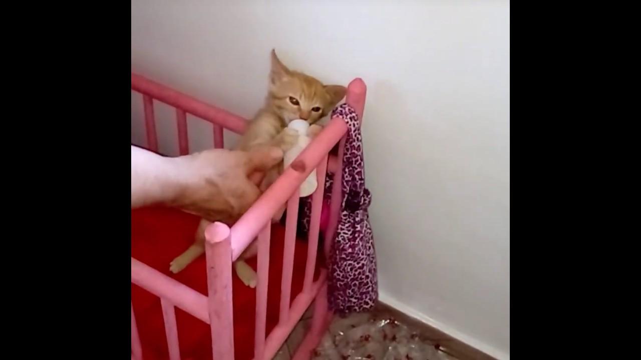 The Dodo This Kitten Runs To Her Crib When She Wants Her Bottle Youtube