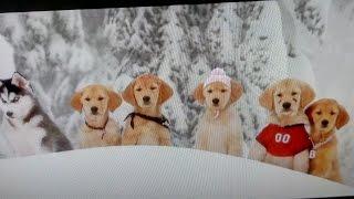 Рождественская пятерка, наши любимые щенки