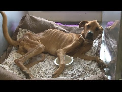 Emaciated dog's owner speaks out