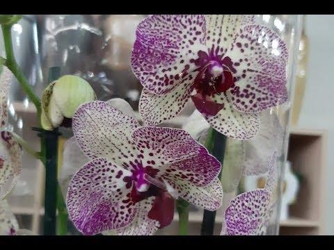 Орхидея для учителя.Морской релакс.Умница Рокки.