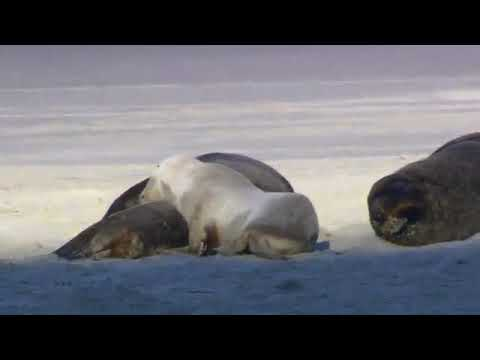 Wildlife Sample Video  Free Download amp Streaming  Internet Archive