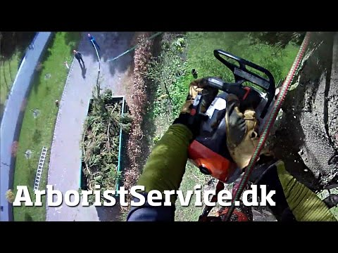 Dump container slide line - Tree rigging - Tree removal - Træfældning - Tree Climbing Arborist