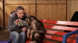 Monkeys react to magic (Really Funny Reactions)