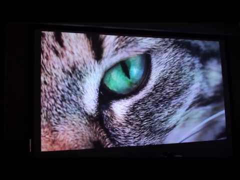 проектор xgimi h1 демонстрация картинки и звука