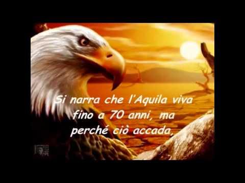 La saggezza dell'Aquila