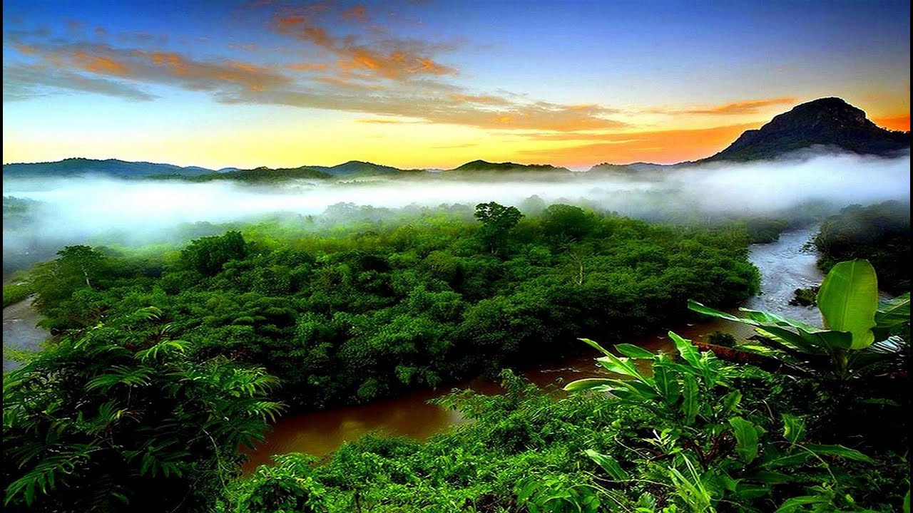 Tropical Rainforest Climate (with video comprehension ...