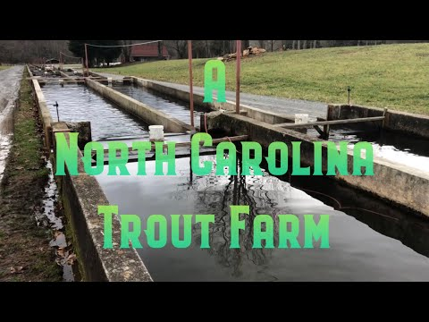 A North Carolina Trout Farm