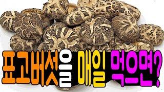 표고버섯을 매일 먹어야 하는 이유 표고버섯 효능과 표고…