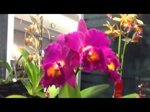 The Victoria Orchid Society Orchid show display tables 2013 Part 1 of 2