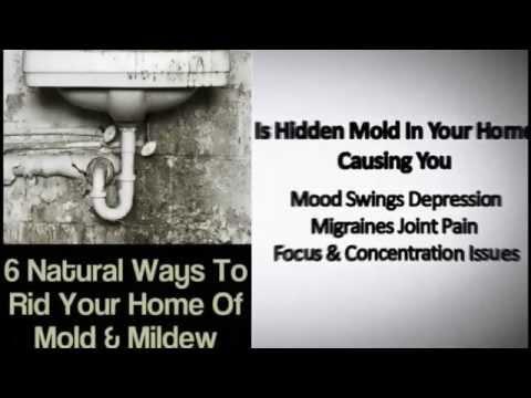 San Diego mold Remediation Costs