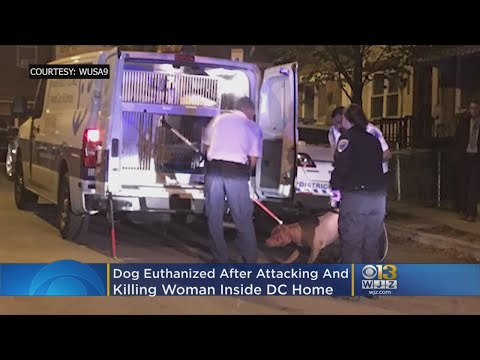 Dog Euthanized After Attacking And Killing Woman Inside DC Home