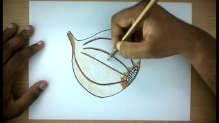 How To Draw a Onion | Easy Step by Step Vegetable Drawing for kids