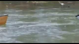 Лабрадор спасает собак в лодке