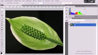 Обзор интерфейса программы Photoshop CS5