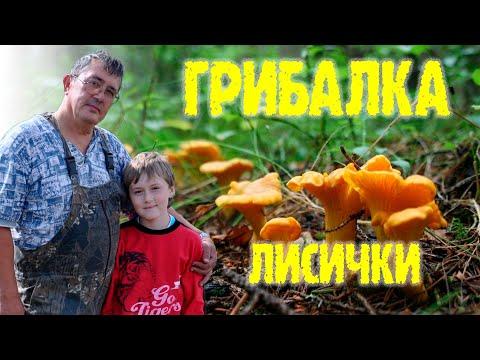 ЛИСИЧКИ в Удмуртии.
