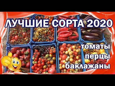Самые урожайные сорта и гибриды 2020 г. Томаты, перцы, баклажаны.