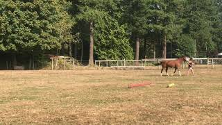 Trying to Keep a Trot!