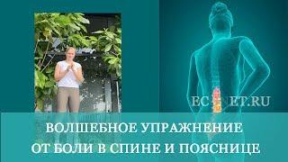 Волшебное упражнение от боли в спине и пояснице от Анастасии Шагаровой| ECONET.RU
