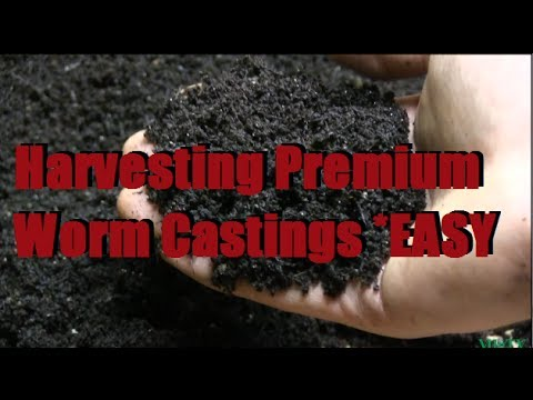 How To Harvest The Best Worm Castings Fast Easy