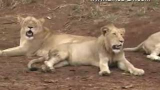 Download Amakhosi Game Lodge KwaZulu Natal South Africa - Africa Travel Channel Mp3