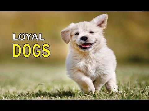 Best Loyal Dogs....!!!!