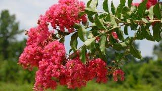 Основы ботаники. Физиология растений. Значение ботаники для человека